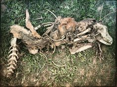 Remaining of a wretched dead dog...probably hit by a fast vehicle on the Ctg-Cxb highway...I remember our dog was hit dead by a fast bus when I came to see us off in the highway many years ago. What a nice dog it was...I was 15 or 16 years old then. I don