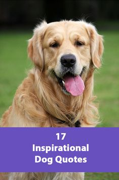 Our 17 Favorite Dog Quotes – Heart Warming Quotes About Dogs All Dogs, Best Dogs, Constipated Dog, Heart Warming Quotes, Dog Nutrition, Sleeping Dogs, Dog Quotes, Dog Behavior, Dog Care
