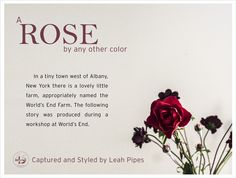 A Rose By Any Other Color is a story by FiftyTwo45 Floral Stylist Leah Pipes. Styling and Images by Leah.