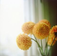 dahlias, oh how I love you.  And I wish you grew better in zone 8...