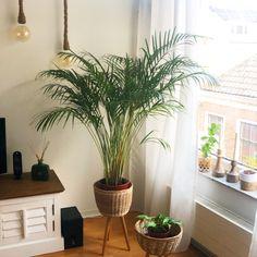 Aesthetic Clothes, Shells, Bedroom, Happy, Plants, Home, Conch Shells, Seashells, Ad Home