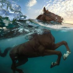 Horse swimming in the water. Underwater horse Photo by ©Vitaliy Sokol #wildlifeonearth