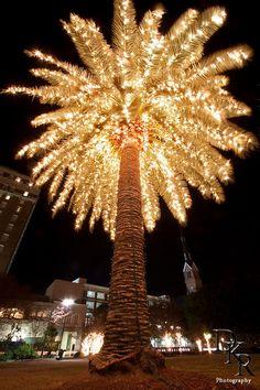 Christmas palm tree. Beautiful.
