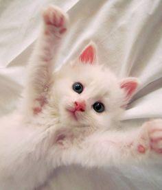 Hug pawese!
