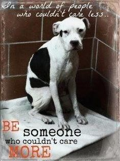 END Dog Fighting & STOP Animal Abuse. The people who do this to dogs are the animals and should be treated like they treat these poor dogs. Rescue Dogs, Animal Rescue, Shelter Dogs, I Love Dogs, Puppy Love, Stop Animal Cruelty, Dog Fighting, Pit Bull Love, Animal Rights