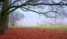 Misty in the park by Peter Rotterdam.NL