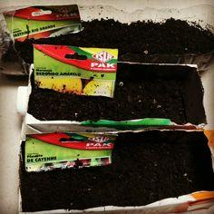 Sementes de tomate rasteiro, maracujá, redondo amarelo e  pimenta de cayenne, plantadas! Bora esperar 7 dias de germinação. 😆 👍   #folhasensitiva #chamaafolhasensitiva #chama #germinação #sementes #tomate #tomates #hortasurbanas #natureza #hortasemcasa #permacultura #plantar #cultivo #cultivar #plantasdentrodecasa #harmonia #maracuja #pimenta
