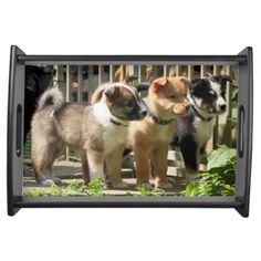 Icelandic Sheepdog 002 Service Trays #cute #dogs #icelandic #sheepdog #puppies #service #trays #zazzle $50.95