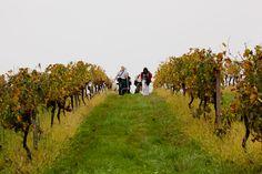 Shooting in the vineyards