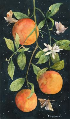 Oranges on a Starry Night, Moths, Orange Blossoms Art Print by The First Garden