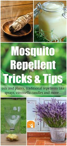 How to Get Rid of Mosquitoes with Easy Natural Remedies! | Healthy Food Mind…