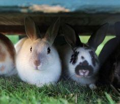 For more info on bunny behavior