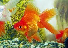 Tipos de filtro para el acuario