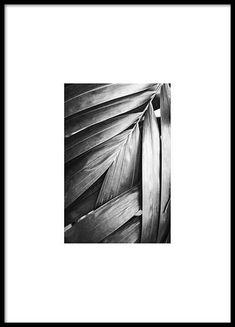 Svartvit poster med palmblad...