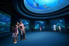 Piece a memorable experience in #Singapore at #S.E.A Aquarium, the biggest sea aquarium in the world with your loved ones.