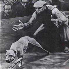 . Good Morning Dog, Bred Pit, American Pitbull, Dog Games, Dog Fighting, Dog Runs, Cane Corso, Hunting Dogs, Pitbull Terrier