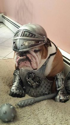 Alright...I'll be your stinkin' Knight in shining armor! But I get TWO dog treats before bedtime tonight!