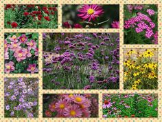 Autumn Flowering Hardy Perennial Long Lived Cottage Garden Plant Collection by holywelllaneplants on Etsy