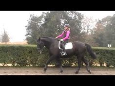 Canter. Stretching over the back and into the rein connection   #3 S4  Dressage - YouTube