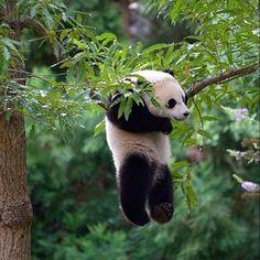 10 x super bored panda's!