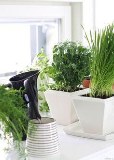 lisbet e.: herb garden