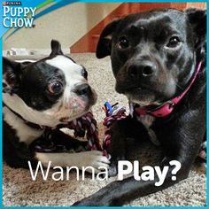 Socializing your new puppy with other dogs will teach him important communication skills. Share if your dog plays well with others!    Thanks for the pic, Julie K.!