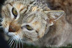 Zdjęcie wykonano w Polsce. Przedstawia kota w pozycji siedzącej, który patrzy się w obiektyw. Zdjęcie zostało zrobione aparatem Canon EOS 1200D w trybie makro.  https://pl.dreamstime.com/stock-photography-image90798226#res18320653
