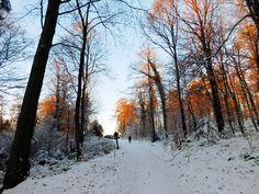 Snow in Heidelberg
