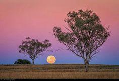 Tamworth - NSW  Photo by ZJR Photography (Australia)