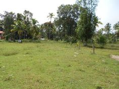 Commercial Land For Sale in Mavelikkara this land measuring 97cents is located in Bharanikavu (Mavelikara) this is in between Kurathiad and Kattanam,in a serene residential area,with three sides road,and is only 750 mtrs from the main road,ie kurathiad to kattanam.