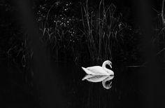 Photograph Light through the shadow by Frédéric Callondann on 500px