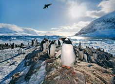 neko harbor, antartica   - Explore the World with Travel Nerd Nici, one Country at a Time. http://TravelNerdNici.com