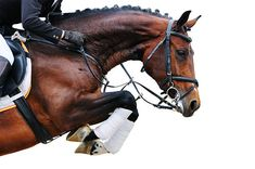 Image result for jumping horse photography