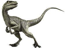 เกาะขอบกรงไดโนเสาร์ทุกสายพันธุ์ ใน Jurassic World - Major Cineplex รอบฉาย รอบหนัง จองตั๋วหนัง เรื่องย่อหนัง เช็ครอบหนัง ดูหนัง ตัวอย่างหนัง ภาพยนตร์ โรงหนัง หนังใหม่ หนังใหม่เข้าโรง
