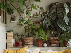A small apartment full of green plants and colors - PLANETE DECO a homes world cuisine diy ideas ideas party room salon styles for bedroom for home Deco Boheme Chic, Boho Chic, Inside Design, Home And Deco, Green Plants, Big Plants, Shade Plants, Small Apartments, Cheap Home Decor