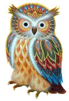 313 Mejores Imágenes De Buhos Pintados Barn Owls Beautiful Owl Y Owls