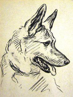 Lucy Dawson 1937 PORTRAIT of a GERMAN SHEPHERD #1 VIntage Dog Art Print Matted