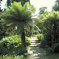 Top Ten Year-round Gardens in Cornwall: Trelissick