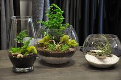 Air plants + Terrariums = MUST HAVE!