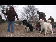 ▶ The Newfoundland Christmas Tree Pull | The Weekly Special - YouTube  Support Newfoundland Rescue!