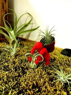 がんばれ!がんばれ!の画像 by SEISHINさん 癒しとポットメンと今日の一枚と収穫と小さいとエアプランツとインテリアグリーン (2016月10月7日) みどりでつながる🍀GreenSnap