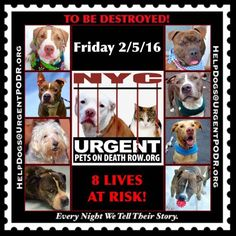 TO BE DESTROYED 02/05/16 - - Info  Please Share! -  Click for info & Current Status: http://nycdogs.urgentpodr.org/to-be-destroyed-4915/