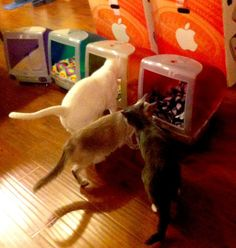 iMac reuse cat house
