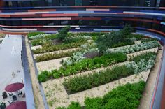 The city of Hamburg has started a multimillion Euro plan for Green Roofing infrastructure in 2015 (Copyright Soenksen). Green Roof System, Sustainable Development, Stepping Stones, Sustainability, Euro, Stairs, City, Outdoor Decor, Design