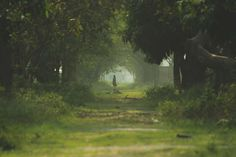 #dark green #ghost #green #lady #lonely #nature #one way #road #village
