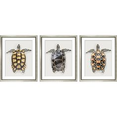 Will Stafford Tropical Turtles (3-Pc) Photographs ($899) ❤ liked on Polyvore featuring home, home decor, wall art, photo wall art, sea turtle home decor, sea turtle wall art, turtle wall art and turtle home decor