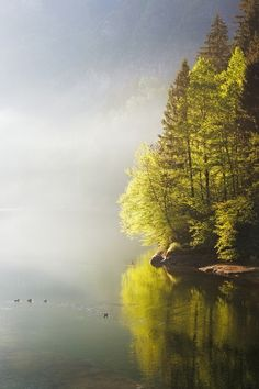 free-wilderness:  #poler #polerstuff #campvibes