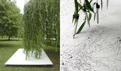 willow tree organic drawing