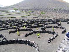 La Carta Mundial de Turismo Sostenible y Lanzarote estarán en FITUR 2016   SoyRural.es