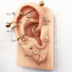Tell us about your ear piercing goals! What ear piercings do you have? Or what are you getting next? Tell us about your ear piercing goals! What ear piercings do you have? Or what are you getting next? Pretty Ear Piercings, Ear Piercings Chart, Ear Peircings, Types Of Ear Piercings, Multiple Ear Piercings, Different Ear Piercings, Ear Piercing Diagram, Body Piercings, Bellybutton Piercings